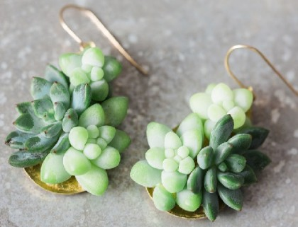 A couple of Succulent earrings