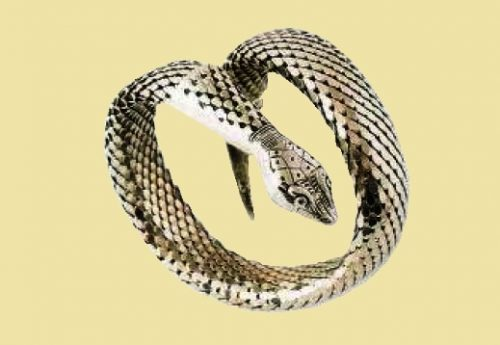 Serpent bracelet, covered with silver scales, stretching. engraving. 1960's. circumference 30.5 cm. £ 35