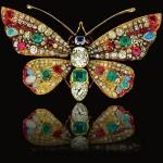 Dona Maria de la Concepcion butterfly
