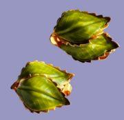 Enameled leaf clips, vintage