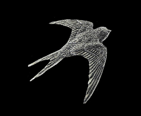 Swallow vintage pin brooch, pewter